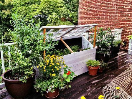 Love & Carrots created this beautiful rooftop container garden in the District. They offer planning, design, installation and maintenance services.