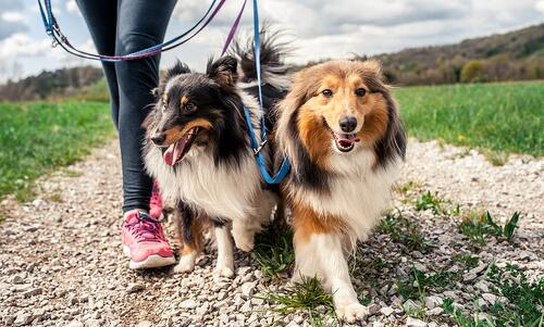 Image result for dogs on a trail