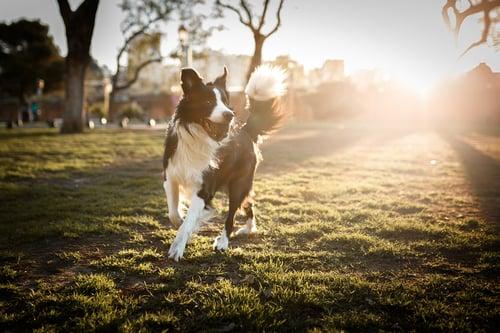 Dog at a park