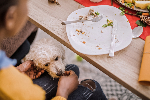 Dog at dinner