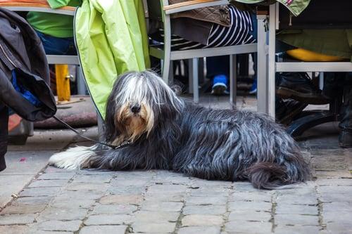 Dog dining on restaurant patio