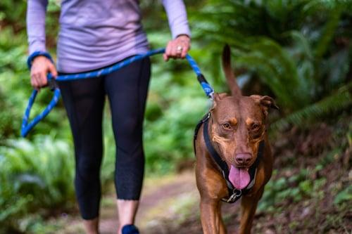 Dog walk on local trail
