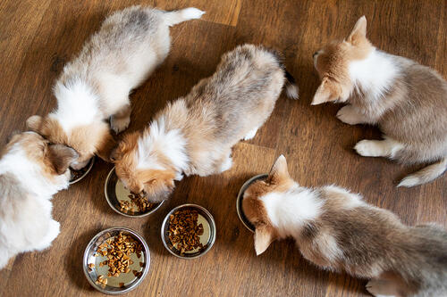 Puppies eating healthy dog food
